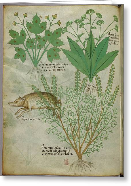 Illustration Of Plants And A Boar Greeting Card by British Library