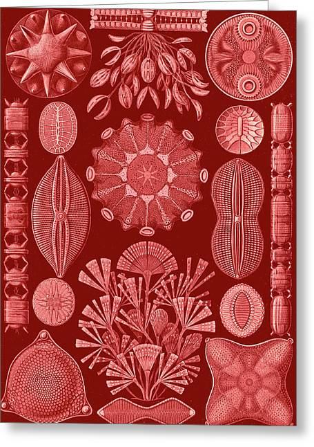 Illustration Shows Algae. Diatomea. - Schachtellinge Greeting Card