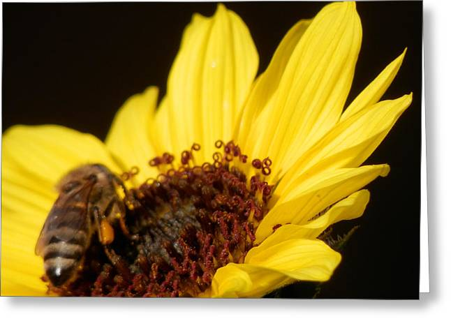 Honey Bee Sweetness Greeting Card