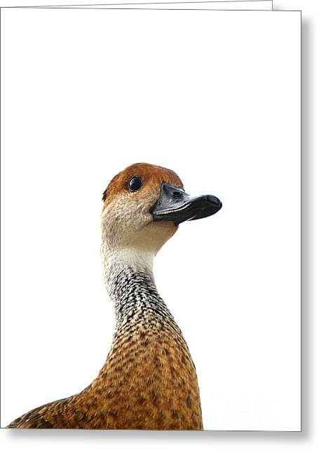 I'm Not Quacking Greeting Card