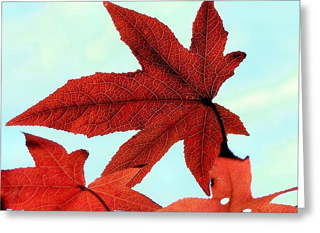 I'm Ready For My Closeup Greeting Card by Janice Drew