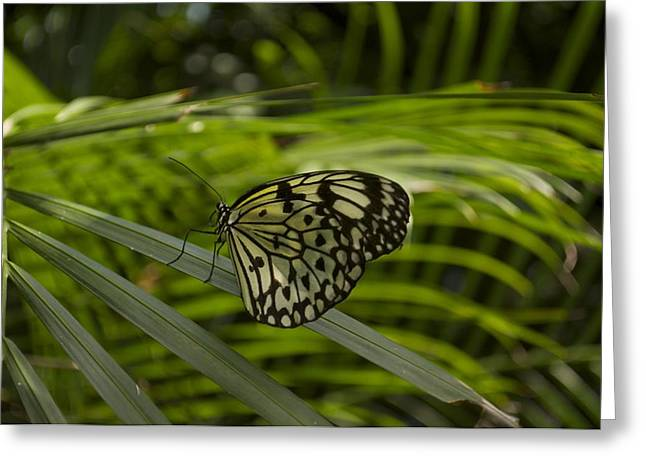 Greeting Card featuring the photograph I'm Ready For My Closeup by Sandy Molinaro