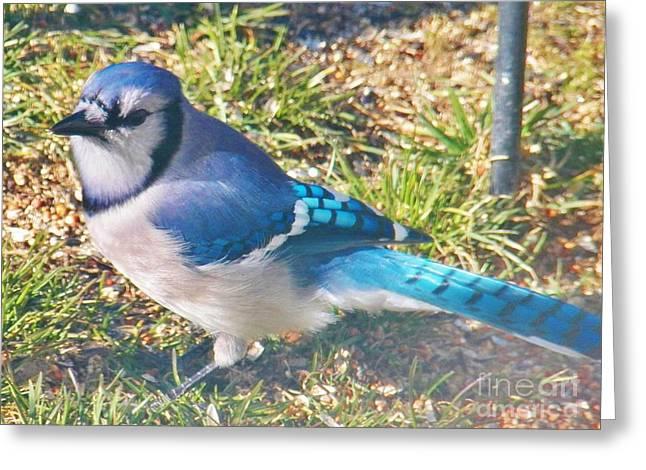 I'm So Blue Greeting Card by Judy Via-Wolff