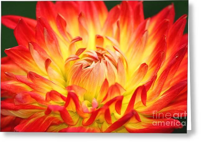 Img 0023 Flor En Rojo Detalle Greeting Card