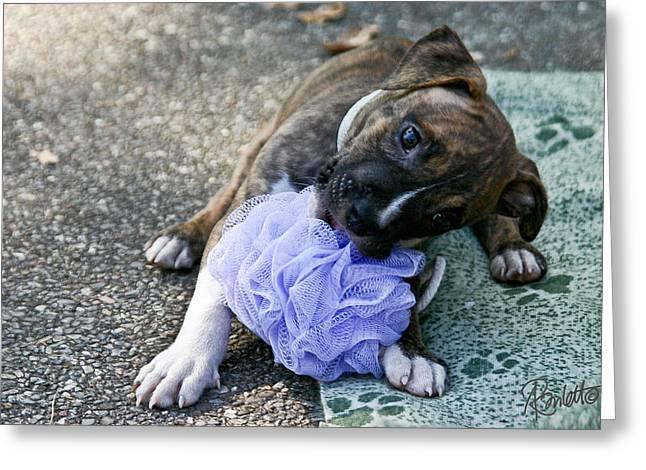 Imma Git U    Pit Bull Pup Greeting Card