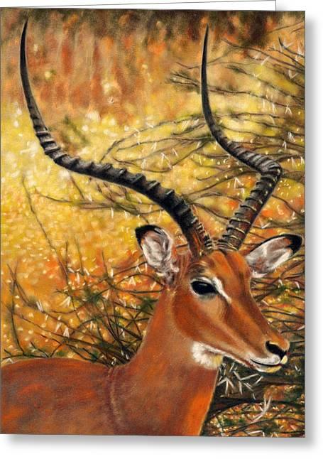 Impala At Sunset Greeting Card