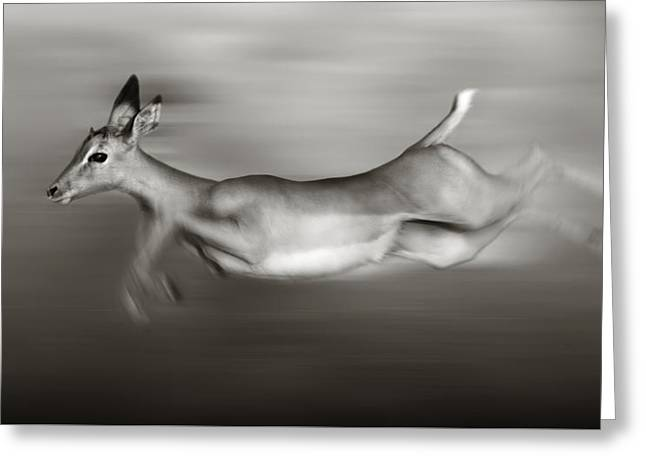 Impala Running  Greeting Card by Johan Swanepoel
