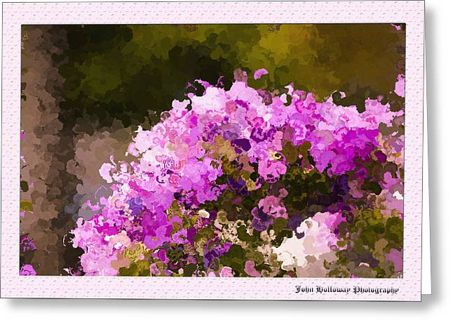 Impatiens In Oil Greeting Card by John Holloway