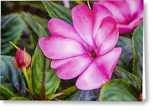 Impatiens Pink Greeting Card