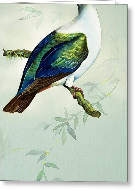 Imperial Fruit Pigeon Greeting Card by Bert Illoss
