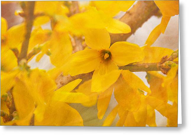 Impressionist Forsythia Greeting Card