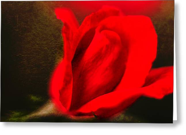 Impressionistic Rose Greeting Card by Dave Bosse