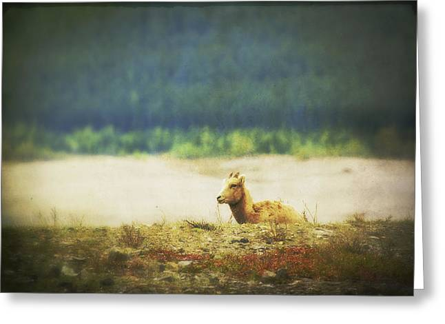 Impressionistic Style Of A Bighorn Greeting Card by Roberta Murray