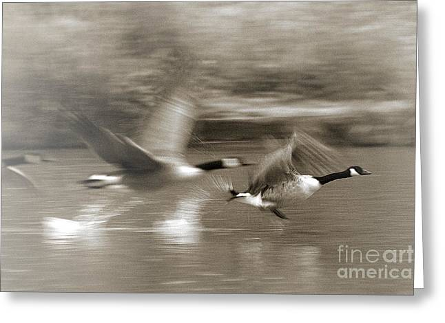 Greeting Card featuring the photograph In A Blur Of Feathers by Jeremy Hayden