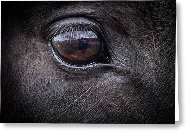 In A Horse's Eye Greeting Card