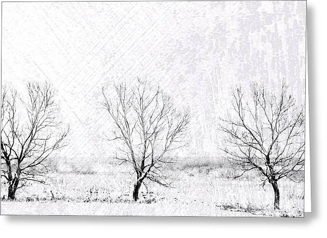 In A Line. Winter Trees Greeting Card by Jenny Rainbow