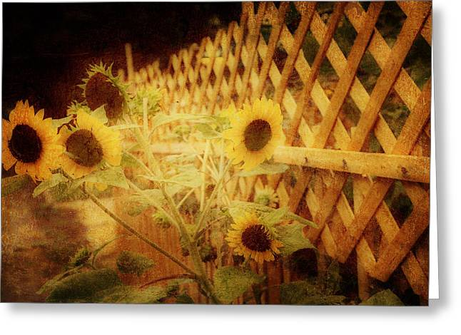 Sunflowers And Lattice Greeting Card by Toni Hopper