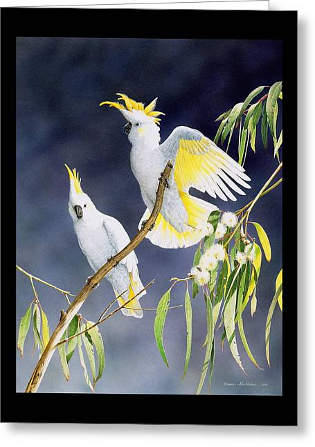 In A Shaft Of Sunlight - Sulphur-crested Cockatoos Greeting Card by Frances McMahon