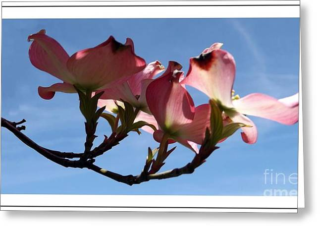 In All Its Glory Greeting Card by Sara  Raber