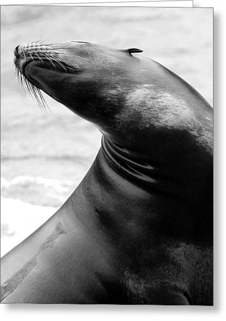 In Bliss In Black And White Greeting Card by Angela Rath