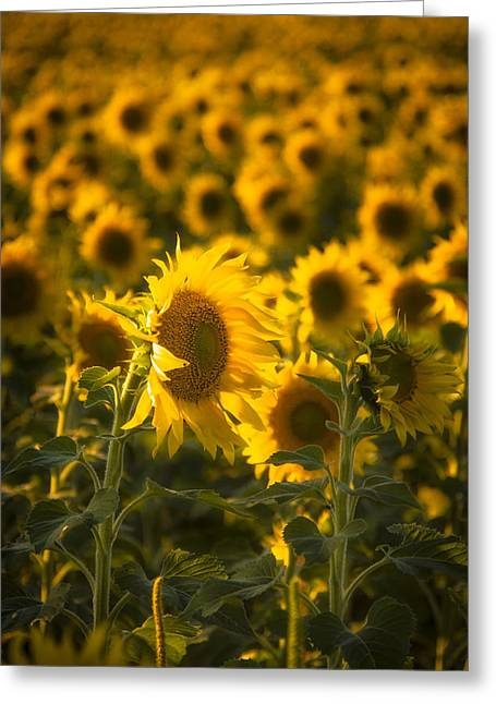 Greeting Card featuring the photograph In Bloom by Scott Bean