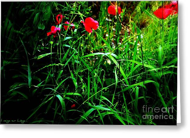In Flanders Fields Greeting Card by Mariana Costa Weldon