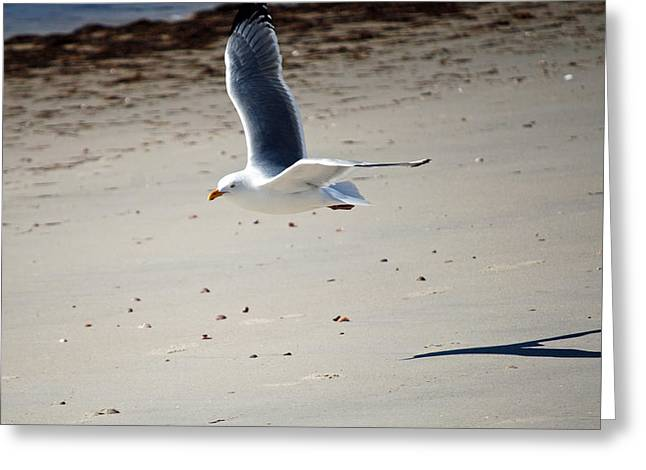 In Flight Greeting Card by Alan Holbrook