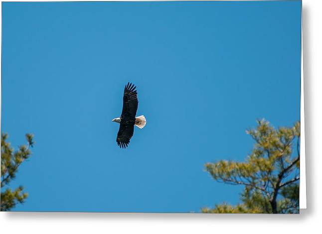 Greeting Card featuring the photograph In Flight by Brenda Jacobs