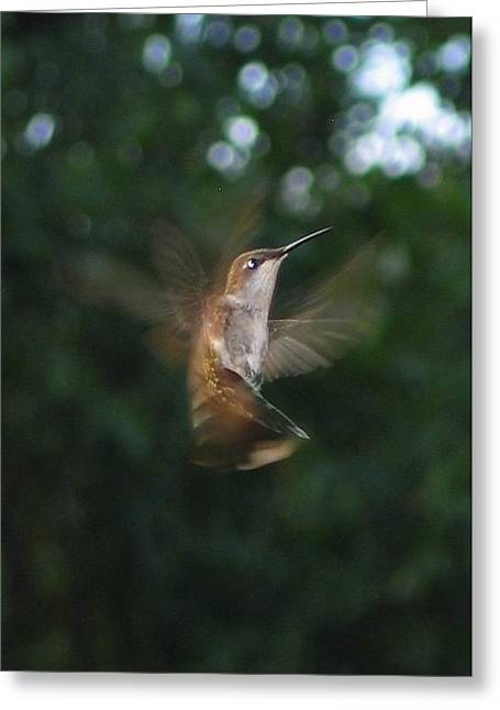 Greeting Card featuring the photograph In Flight by Photographic Arts And Design Studio