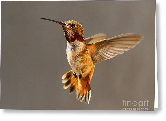 In-flight Pose For The Camera Greeting Card by Carl Jackson