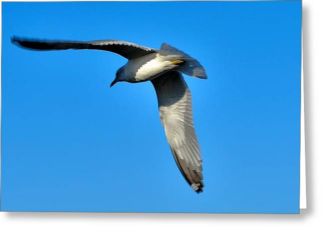 In Flight Greeting Card by Thomas  MacPherson Jr