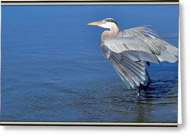 In For A Landing Greeting Card by Toni Abdnour