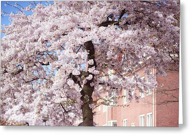In Its Glory. Pink Spring In Amsterdam Greeting Card by Jenny Rainbow