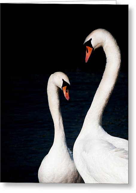 Greeting Card featuring the photograph In Love by Laura Melis