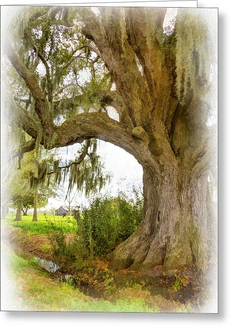 In Praise Of Live Oaks 2...paint Greeting Card