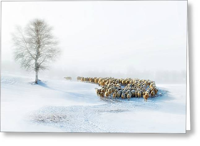 In Snow Greeting Card