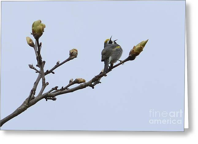 In Song Greeting Card by Randy Bodkins