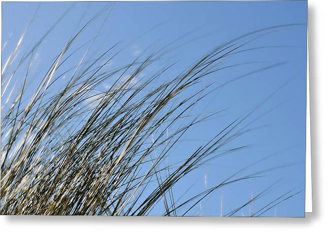 In The Breeze - Soft Grasses By Sharon Cummings Greeting Card by Sharon Cummings