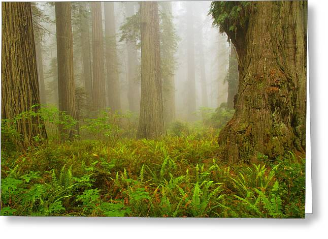 In The Company Of Giants Greeting Card by Kunal Mehra