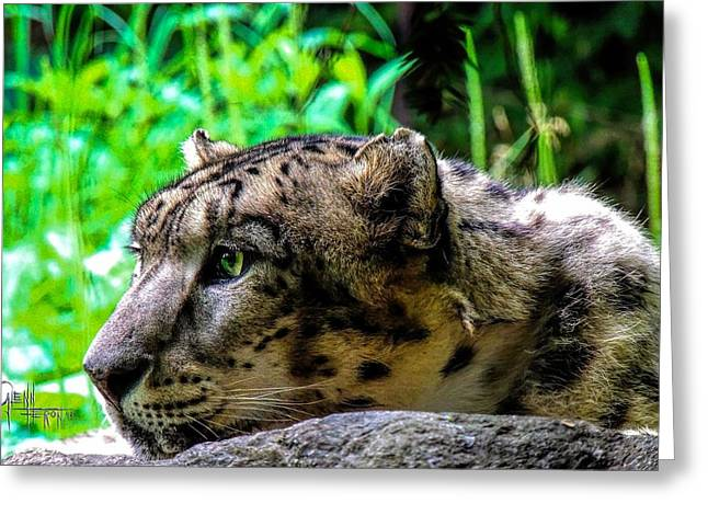 In The Eye Of A Leopard Greeting Card by Glenn Feron