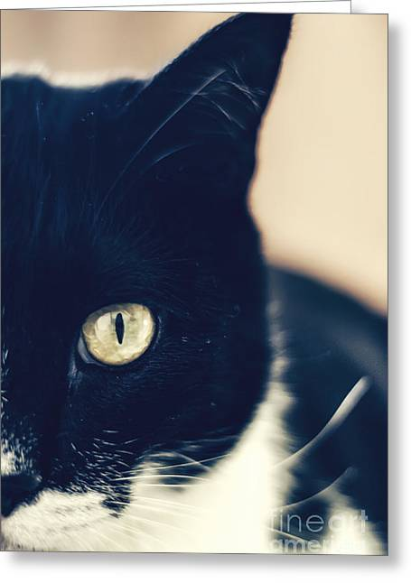 In The Eye Of The Cat Greeting Card by Emily Kay