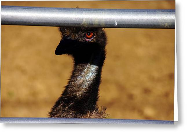 In The Eye Of The Emu Greeting Card by Michael Courtney