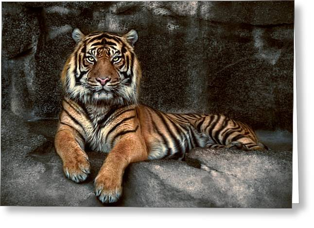 In The Eyes Of The Tiger Greeting Card by Joachim G Pinkawa
