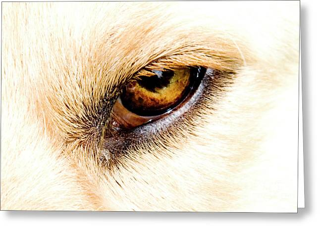 Greeting Card featuring the photograph In The Eyes.... by Rod Wiens