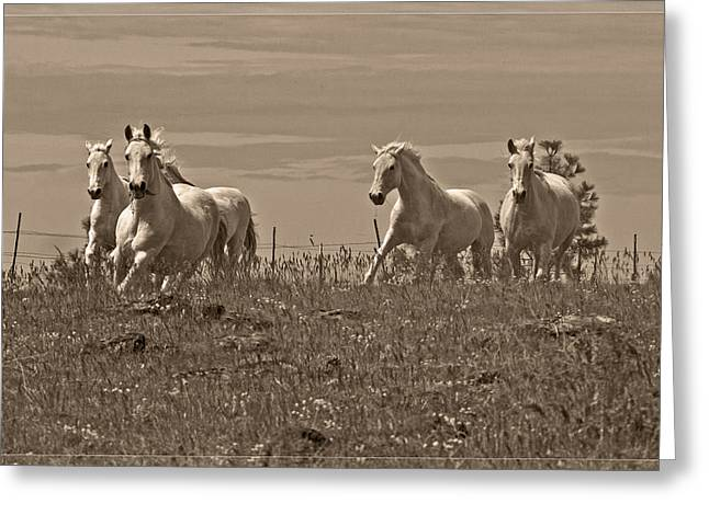 In The Field Greeting Card by Wes and Dotty Weber