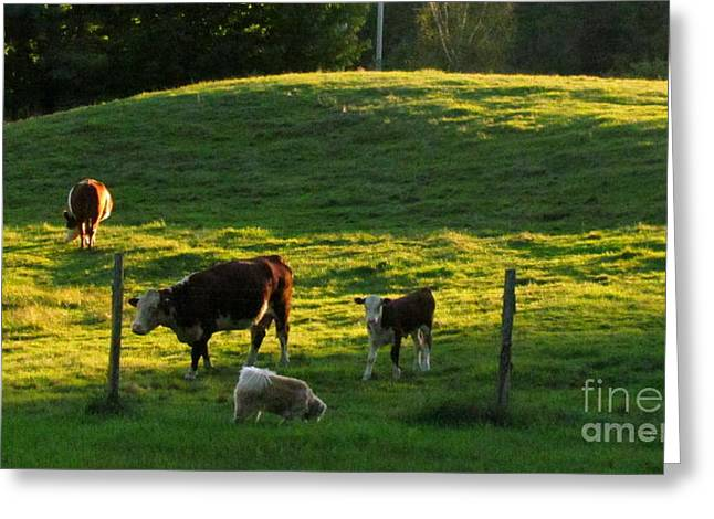 In The Field Greeting Card by Randi Shenkman
