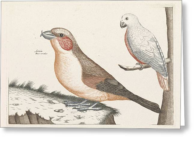 In The Foreground A Crossbill, Right On A Branch A White Greeting Card by Anonymous