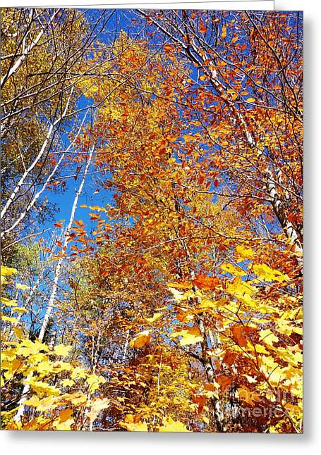 In The Forest At Fall Greeting Card