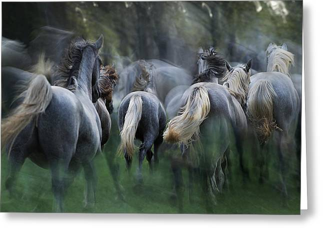 In The Gallop Greeting Card by Milan Malovrh