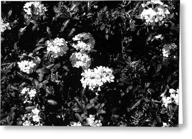 Greeting Card featuring the photograph In The Garden- Black And White by Alohi Fujimoto